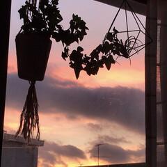 夕焼け/夕暮れの空/窓から見える夕焼け/暮らし/窓辺/グリーン 部屋から見える夕焼け🌇  今日も、暑かっ…