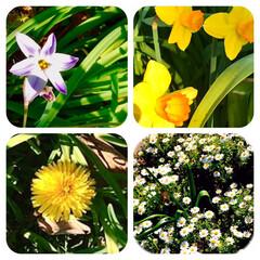 春の花/植え込みの花/花好き おはようございます☀  家の前の 街路樹…(1枚目)