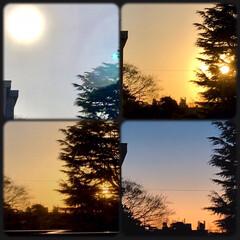 今日もお疲れさま/暮らし/部屋からの景色/夕暮れ/夕陽/夕焼け お天気が良いので、 よく動きました〜😊 …(1枚目)