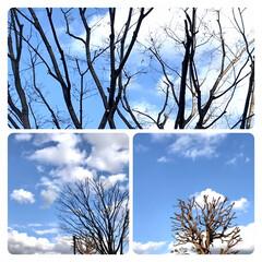 空/青空/暖かい日/近所にて/買い物 綺麗な空  近所で買い物🚶♀️ コート…(1枚目)