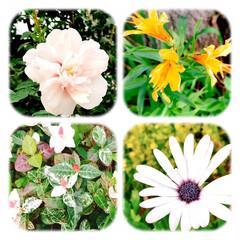 花/夏の花/花のある暮らし 混雑する連休前に、買い物と 病院に行く予…