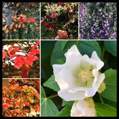 紅葉/花/暮らし/秋 紅く染まった木の葉と その周りに咲く花。