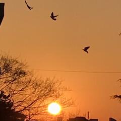 夕焼け/夕陽/夕暮れ/窓からの眺め/癒し 今日の夕焼けも 綺麗でした🌇 お天気下り…(2枚目)