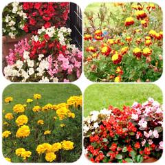 散歩/花/街の中の花/癒し/安らぎ 道草散歩🚶♀️🚶♀️🚶♀️🌱  買…