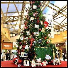 クリスマスツリー/上野駅/パンダがいっぱい 上野駅、中央口の 巨大クリスマスツリー🎄…