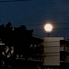 月/オレンジ色の月/大きな月/スマホカメラの限界 玄関を開けたら 真正面に大きなオレンジ色…