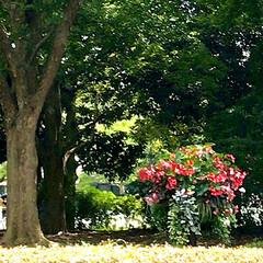 お出掛け/公園/緑の木陰/赤い花/森林浴 昨日の、木場公園の ポツンと赤い花。 緑…