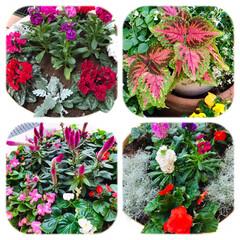 花/花のある暮らし/癒し おはようございます🌱  今日の花達 寒く…(1枚目)