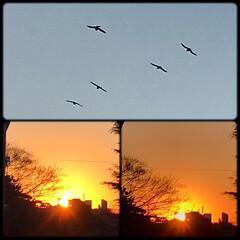 空/夕焼け/夕暮れ/部屋からの眺め/暮らし 真っ赤な夕焼けと🌇 カラスが飛行機みたい…