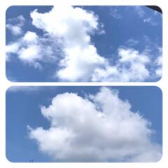 「わんこ雲  上は、ダックス君のお座りに …」(1枚目)