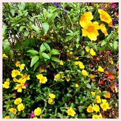花/癒し 今日も寒いですねー😵 冬物出しました。 …