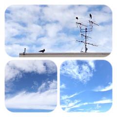 晴れた日の朝/空/雲/爽やかな朝 晴れて、青空が見えると 空や、雲が好きな…