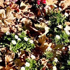 落ち葉/自然/季節 落ち葉に埋もれた 花と、 太陽を浴びて赤…