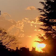 空/雲/夕陽/夕焼け/部屋から見える夕陽/夕暮れ/... 春一番、風が強いので、 雲もどんどん流れ…(5枚目)
