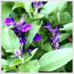 花/草花/小さな花が好き/癒し おはようございます🌱  だいぶ過ごしやす…