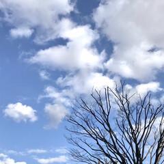空/青空/暖かい日/近所にて/買い物 綺麗な空  近所で買い物🚶♀️ コート…(3枚目)