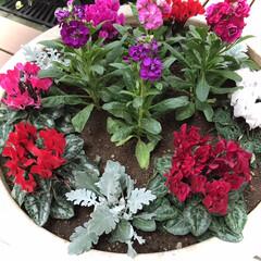 花/花のある暮らし/癒し おはようございます🌱  今日の花達 寒く…(2枚目)