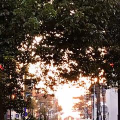 夕暮れの景色/夕焼け/空/月/星/家の近くの夕景 病院の帰り道、 疲れて歩いて帰る道 近所…(3枚目)