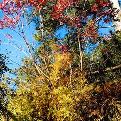 落ち葉/自然/季節 落ち葉に埋もれた 花と、 太陽を浴びて赤…(2枚目)