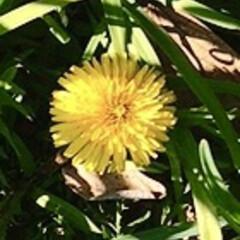春の花/植え込みの花/花好き おはようございます☀  家の前の 街路樹…(4枚目)