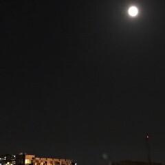 空/月/十五夜/夜空/家から見る月/暮らし 今、玄関をあけたら、 綺麗に、中秋の名月…