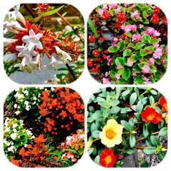 花達/花好き/癒し/生活/散歩 朝、干した洗濯物 もう、乾いてました。 …