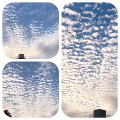 今空/鱗雲/空いっぱい/秋空/空が好き 今空、 凄い! 空いっぱい鱗雲❣️