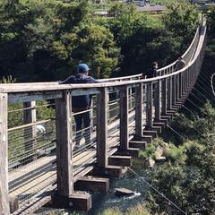 お出かけ/原尻の滝/滝にかかる虹/吊り橋/秋晴れ 今日は、大分の原尻の滝を 見てきました。…(8枚目)