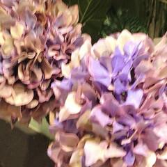 花/花屋さんの花/癒し/花が好き/暮らし 窓から見える空も、景色も どんより、 気…(5枚目)