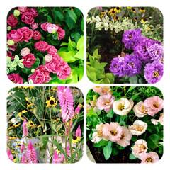 花/花好き/癒し/暮らし 今日、出会った花達