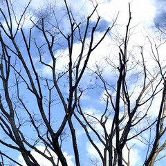 空/青空/暖かい日/近所にて/買い物 綺麗な空  近所で買い物🚶♀️ コート…(2枚目)