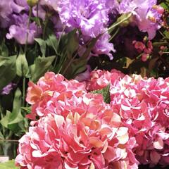 花/花屋さんの花/癒し/花が好き/暮らし 窓から見える空も、景色も どんより、 気…(4枚目)