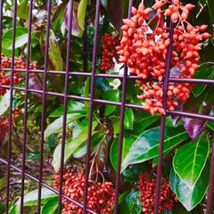 花/木/散歩/癒し/暮らし おはようございます。 今朝も涼しい朝を迎…(1枚目)