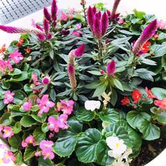 花/花のある暮らし/癒し おはようございます🌱  今日の花達 寒く…(3枚目)