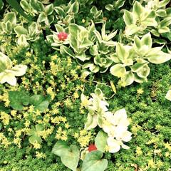 花/グリーン/花のある暮らし おはようございます☀  カーテンを開けて…(1枚目)