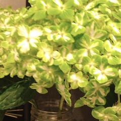 花/花屋さんの花/癒し/花が好き/暮らし 窓から見える空も、景色も どんより、 気…(6枚目)