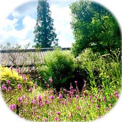 波佐見の花/花が好き/景色/旅 今日から9月 朝から涼しい風が…。 部屋…