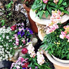 花/寄せ植え/花のある暮らし 近所のお宅の 入り口には、いつも綺麗な …