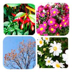 花/植物/空/癒し/暮らし おはようございます☀  青空が、広がり …