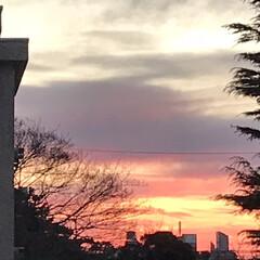 夕暮れ/夕焼け/空/ベランダからの景色/暮らし/癒し 1/11  16:30〜の空  明日は、…(2枚目)
