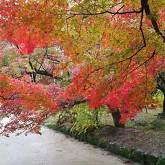 紅葉スポット/リミアの冬暮らし かまど神社