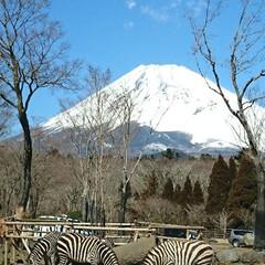 フォロー大歓迎/富士山/サファリパーク/家族旅行/おでかけ 昨日、帰路の途中「富士サファリパーク」に…