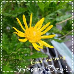 癒しの場所/癒しの空間/元気の源/庭の花たち/我が家の庭の花/花好き/... 今日も素敵な一日になりますように(♥Ü♥…