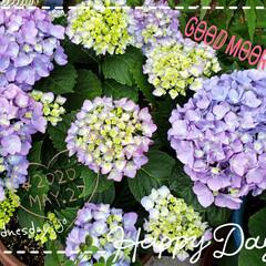 花の成長/癒しの場所/癒しの空間/庭の花たち/我が家の庭の花/ガーデニング/... 今日も素敵な一日になりますように(♥Ü♥…
