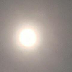 輝いていた/お月さま 昨夜の 🌙*゚お月さん🌕  輝いていたの…