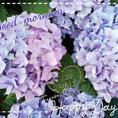 ガーデニング/グラデーション/お花大好き/梅雨時/癒しの空間/花のパワー/... 今日も素敵な一日になりますように(♥Ü♥…