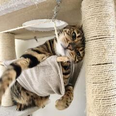 猫カフェ/猫のいる暮らし/ハンモック/キャットハンモック/キャットタワー/猫 キャットタワー ハンモック