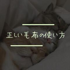 毛布/羽毛ふとん/羽毛布団/雑学/豆知識/有益な情報/...