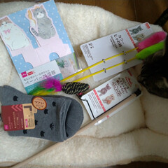 500均/猫おもちゃ/猫との暮らし/ニャンコ同好会/ペーパー加湿器/猫ベッド/... 病院帰り ダイソーにて 猫おもちゃ2個 …