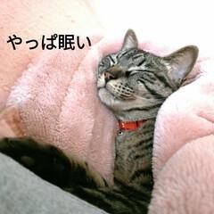 寝起き/キジトラ/眩しい/猫との暮らし/ニャンコ同好会/朝/... 昨夜 3時頃まで腰を冷やしたりしながらテ…(5枚目)